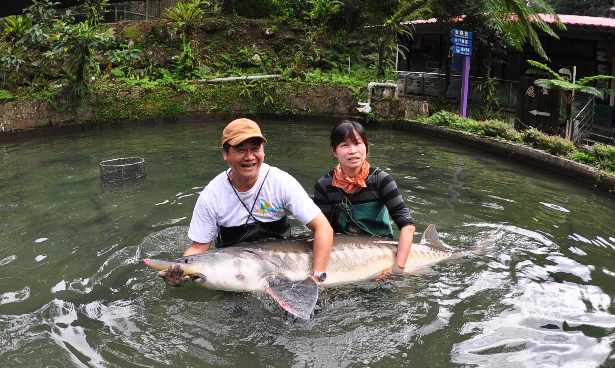 千戶傳奇生態農場 - 鱘找原始活化魚山中傳奇傳千戶